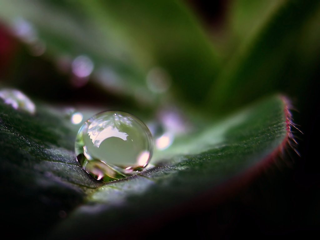macro-photography-perfect-water-droplet-ToniVC